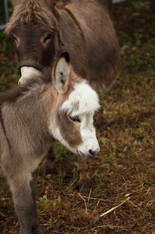 Jeune âne jeune âne