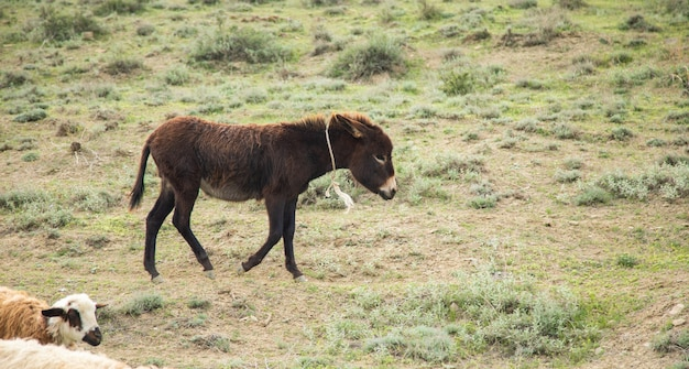 Jeune âne sur le terrain