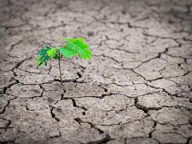 Jeune arbre fort poussant dans un sol aride et sol fissuré