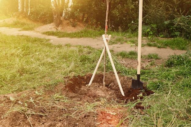 Jeune arbre planté d'arbres en milieu urbain sur le territoire de la maison. contexte de l'embourgeoisement de la ville. concept d'aménagement paysager, de nature, d'environnement et d'écologie. espace de copie