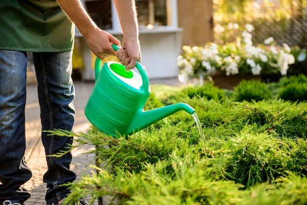 Jeune beau jardinier arrosant, en prenant soin des plantes se bouchent.