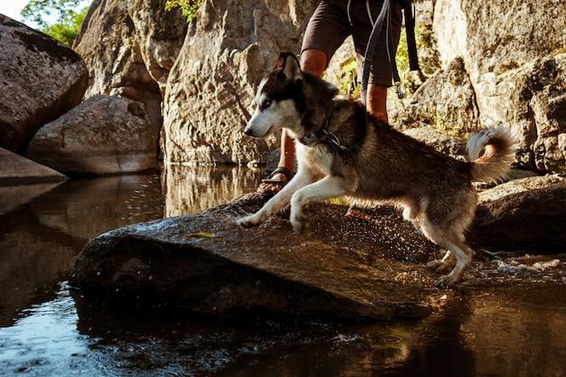 Jeune, beau, marche homme, à, chiens huskies, dans, canyon, près, eau
