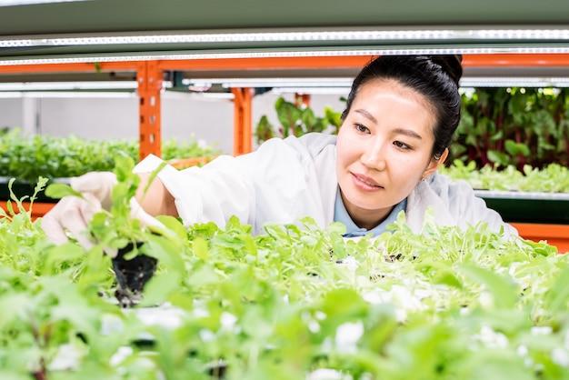 Jeune biologiste asiatique à la recherche de semis verts sur étagère tout en faisant des recherches sur de nouvelles sortes de plantes en serre