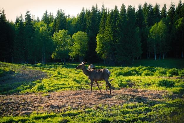 Jeune cerf dans la forêt par une journée ensoleillée.