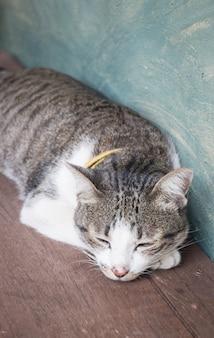 Jeune chat endormi à la maison