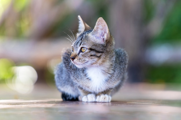 Jeune chat gris de rue