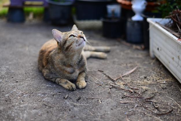 Un jeune chat gris tigré regardant vers le ciel