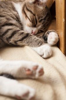 Jeune chat mignon dormant sur le canapé