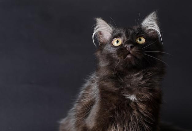 Jeune chat noir charmant