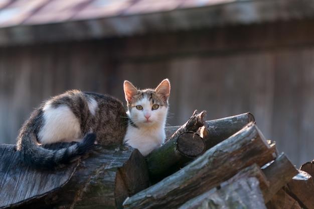 Jeune chat se réchauffant au soleil et assis sur une pile de bûches.