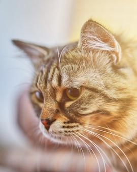 Jeune chat surpris fou fait de gros yeux gros plan