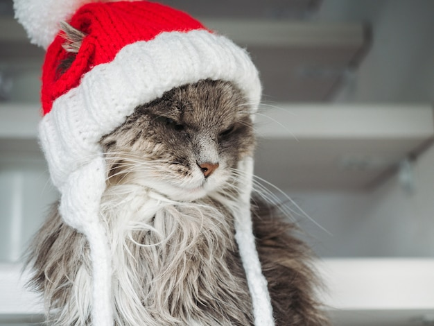 Jeune chaton dans un chapeau de laine rouge
