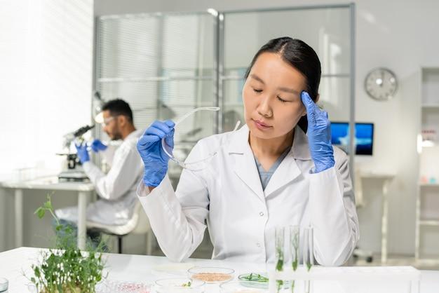 Jeune chercheuse asiatique fatiguée en blouse blanche et gants touchant sa tête tout en étudiant des échantillons de germes cultivés en laboratoire en laboratoire