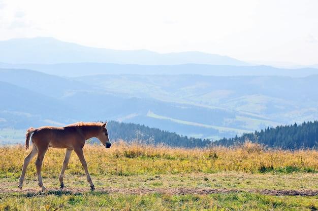 Jeune cheval contre un paysage de montagne