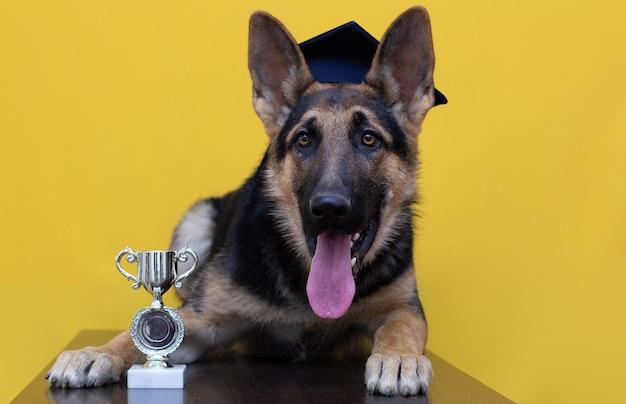 Jeune chien de berger allemand pelucheux dans le chapeau d'étudiant avec sa tasse d'or possédée d'isolement sur le fond jaune