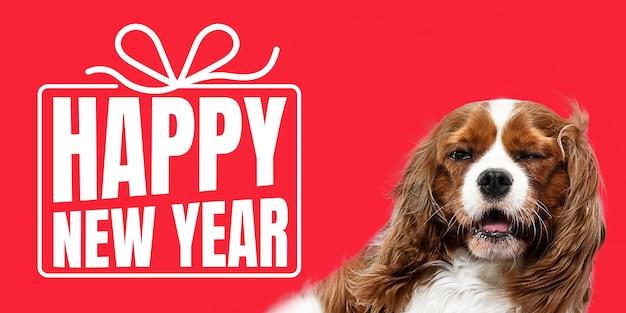 Jeune chien, chiot ou animal de compagnie isolé sur fond de studio rouge souhaite bonne année et joyeux noël. concept de noël, nouvel an 2020, ambiance hivernale. copyspace, flyer, carte postale. émotions, animaux.