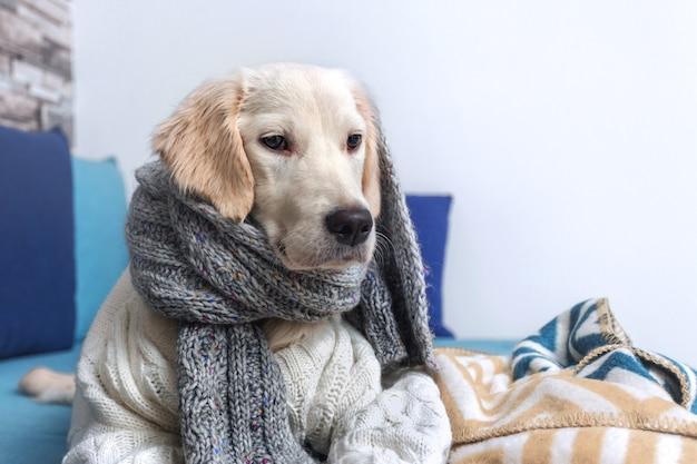 Un jeune chien golden retriever est allongé sur le canapé
