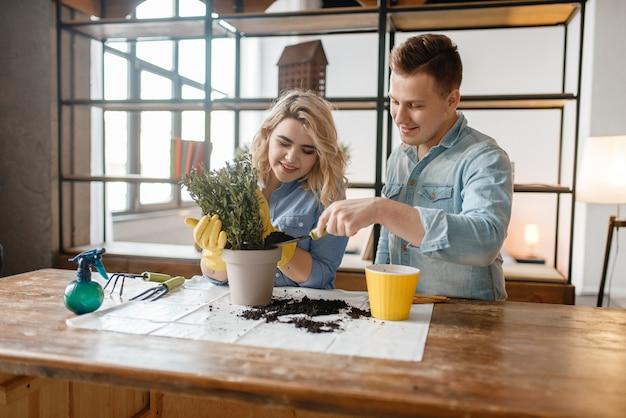 Un jeune couple change le sol des plantes à la maison