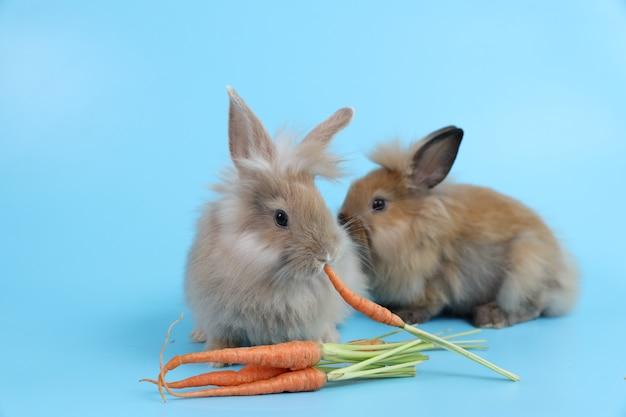 Jeune, deux, mignon, lapin brun pâques, mangeant, carottes
