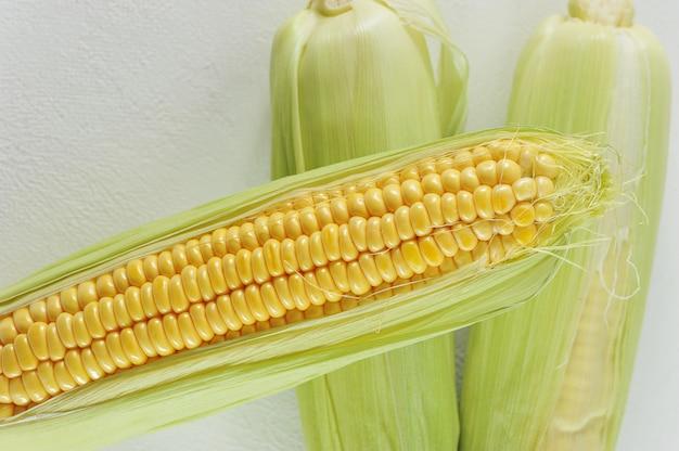 Jeune épi de maïs blanc