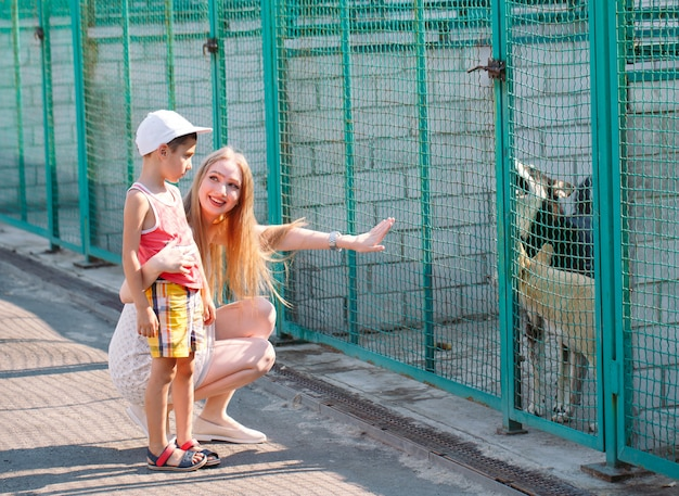 Une jeune famille cherche un animal dans un refuge pour chiens.