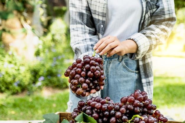 Jeune femme agricultrice asiatique tenant des raisins après la récolte sous forme de vignoble, concept de fruits sains.