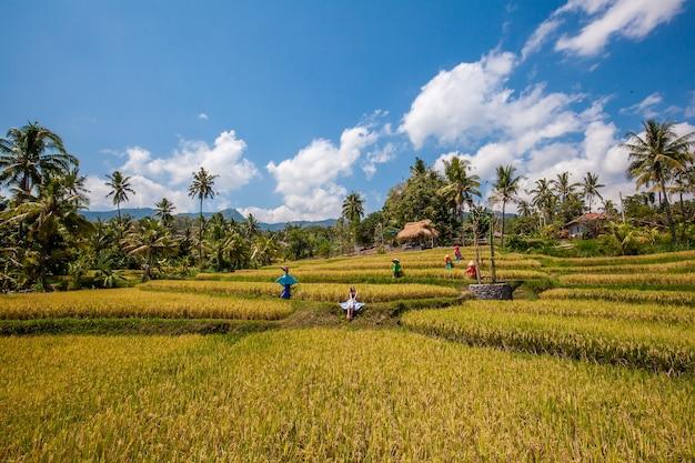 Jeune femme au milieu d'une terrasse de riz