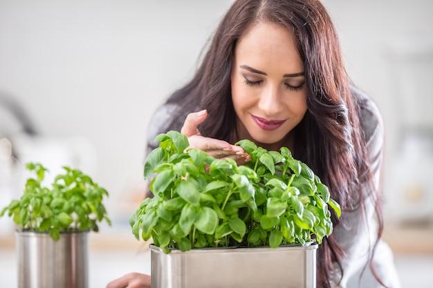 Jeune femme brune tenant et sentant le beau basilic vert dans sa cuisine.