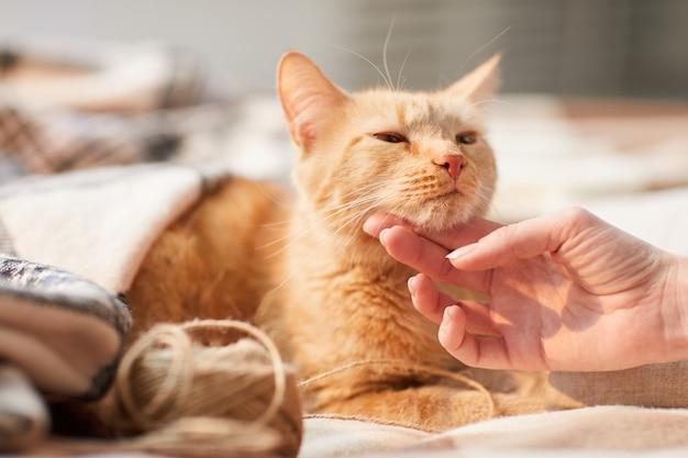 Jeune femme caressant le chat au gingembre
