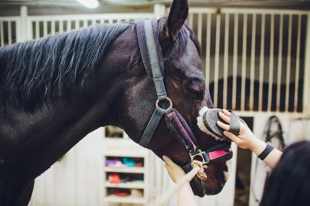 Jeune femme caressant et toilettant le cheval noir.