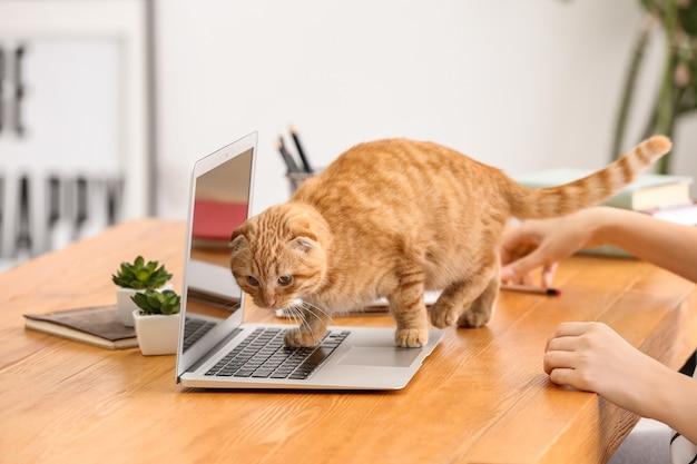Jeune femme avec chat drôle mignon travaillant à la maison