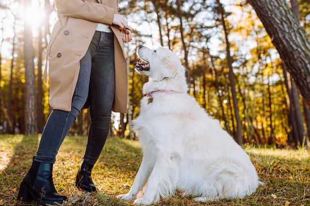 Jeune femme marche et joue avec son golden retriever dans le parc automne jaune. amitié, soins, concept d'amour pour animaux de compagnie.