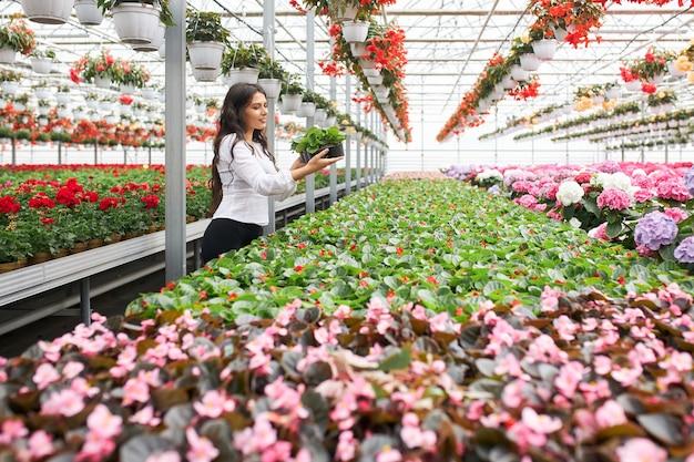 Jeune femme organisant des pots de fleurs à effet de serre