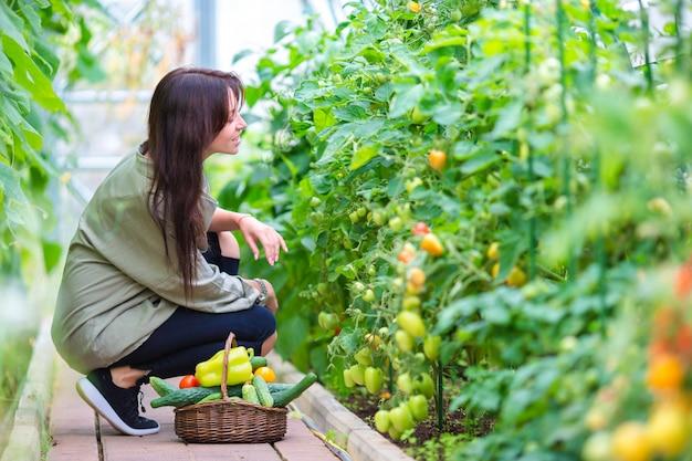 Jeune femme avec panier de verdure et de légumes en serre. temps de récolte