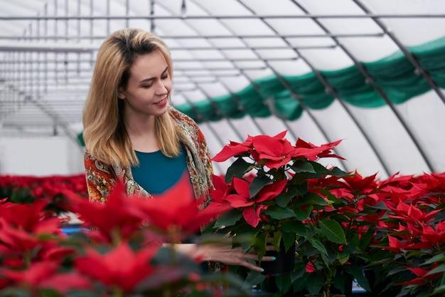 Jeune femme parmi les fleurs de poinsettia rouge dans une serre tient avec amour un pot avec l'une de ces plantes dans ses mains