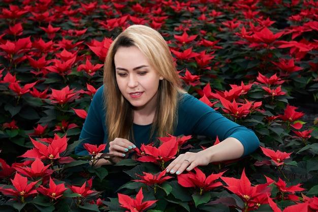 Jeune femme parmi de nombreuses grandes fleurs de poinsettia rouge choisit l'une de ces plantes