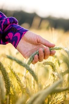 Jeune femme portant un chemisier coloré tenant doucement un épi de blé mûrissant dans un concept de nature bio, écologique ou biologique, gros plan sur sa main.