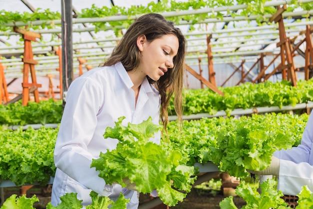 Jeune femme récolte de la laitue dans un jardin hydroponique.