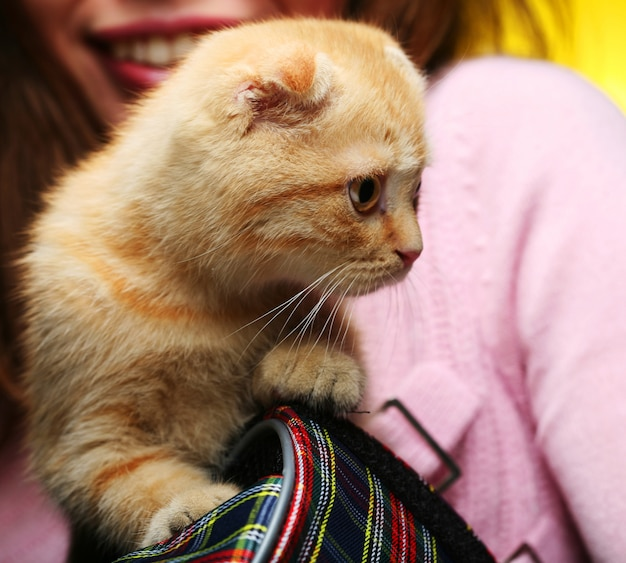 Jeune, femme, rouge, angleterre, lop-eared, chaton