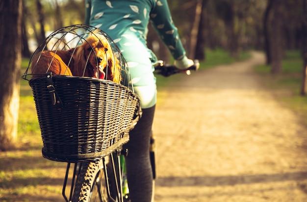 Jeune femme s'amusant près du parc de campagne, faisant du vélo, voyageant avec un chien épagneul compagnon. nature calme, jour de printemps, émotions positives. activité de loisir sportive et active. marchant ensemble.