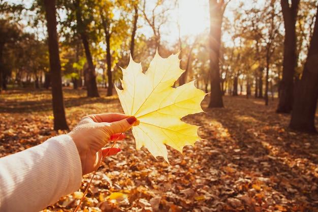 Jeune femme tient dans ses mains des feuilles d'automne d'érable jaune dans un parc.