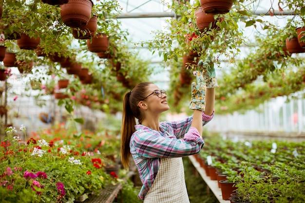 Jeune femme travaillant avec des fleurs de printemps en serre