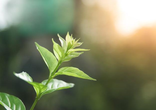 Jeune feuille d'arbre sur fond flou dans le jardin d'été