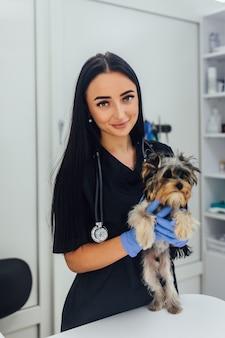 Une jeune fille brune vétérinaire à la clinique examine avec un stéthoscope un chien de race yorkshire terrier