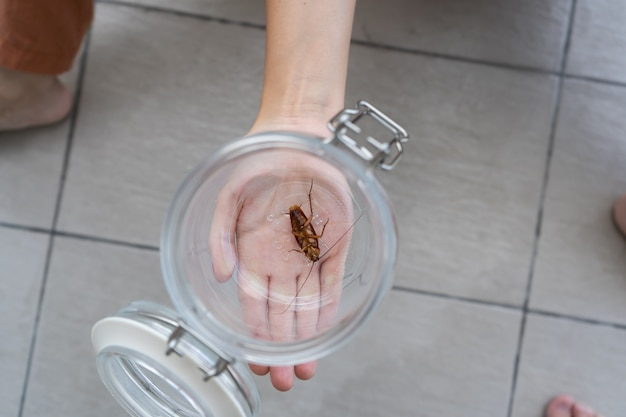 La jeune fille tient sur sa paume un bocal en verre avec un cafard à l'intérieur