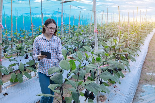 Jeune fille vérifiant les aubergines de qualité par tablette. concept de production agricole et alimentaire.