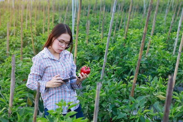 Jeune fille vérifiant les plants de poivron de qualité par tablette. concept de production agricole et alimentaire.
