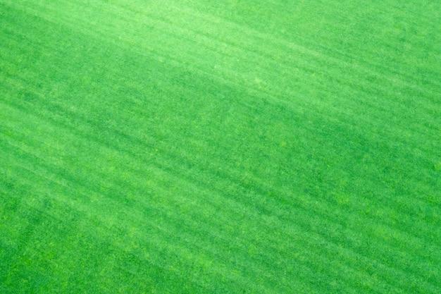 Jeune herbe verte fraîchement tondue,