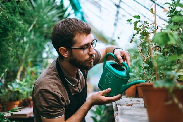 Jeune homme, arrosage des plantes en serre