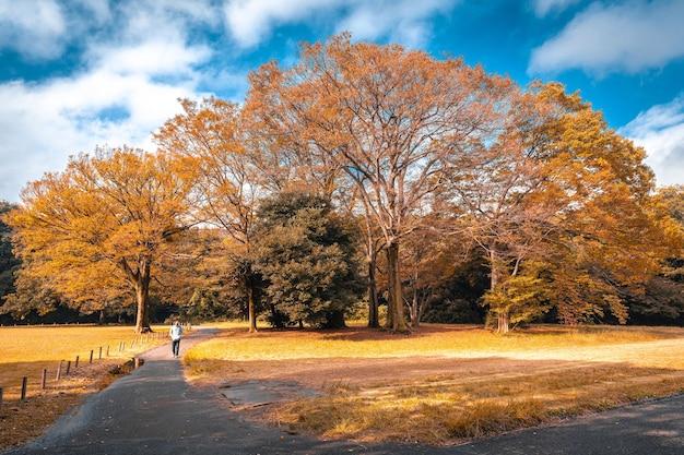 Jeune homme marchant détente dans le parc se sentir bon souvenir dans la forêt du parc en automne.